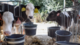 Sociální zemědělství